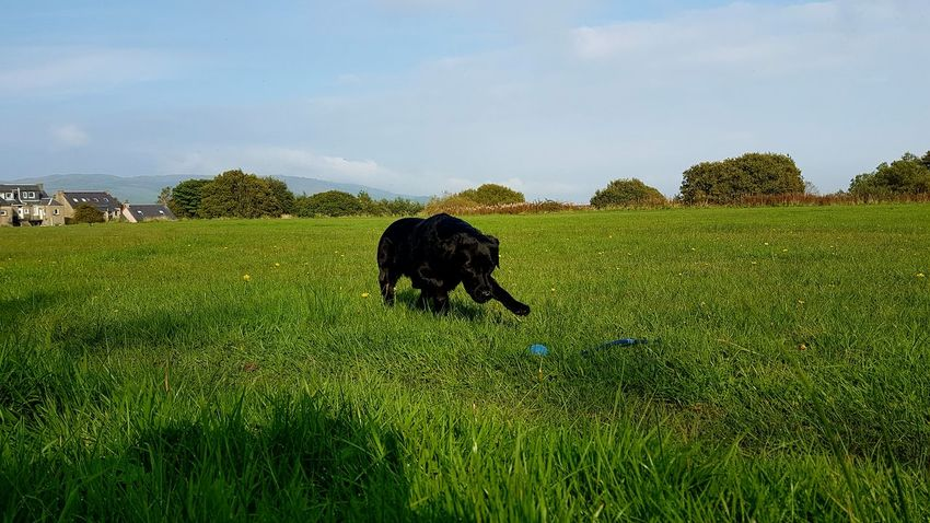 Grass Mammal One Animal Dog Outdoors No People Nature