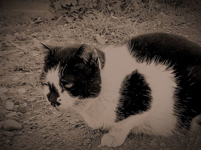 Stray cat Stray Cat Stray Animal Cat No People Nature Outdoors Land Day Close-up Black Color
