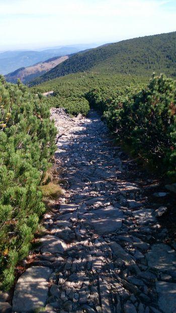Riesengebirge Grenzweg, So Sieht Ein Schöner Wanderweg Aus In Der Krummholzzone, Naturelovers Nature_collection
