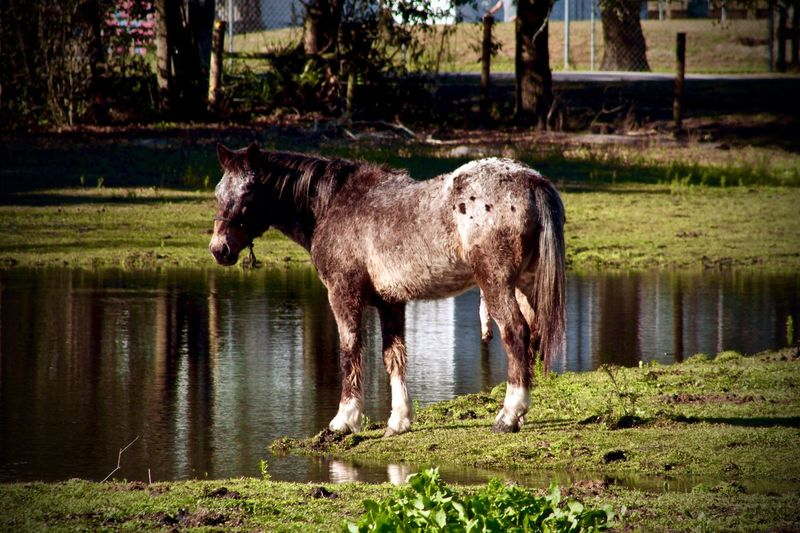 Check This Out Mustang Wild Horses Horses Horse Life Horse Photography  Beautiful Nature Horse