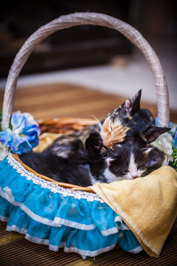Cats resting in decorated basket