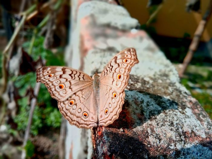 EyeEm Selects Butterfly - Insect Animals In The Wild Animal Wildlife One Animal Insect Close-up Animal Themes Animal Outdoors Nature No People Focus On Foreground Day Beauty In Nature Spread Wings Perching Be. Ready. EyeEmNewHere Rock - Object Freshness Fragility Growth