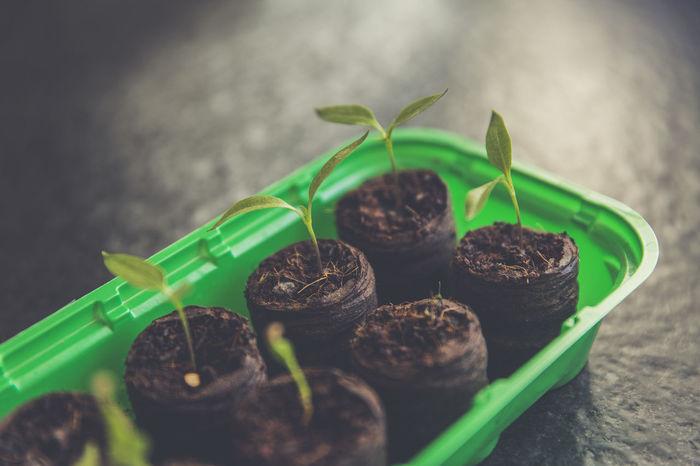 Agriculture Breeding Food And Drink Plants Urban Gardening Crop  Self Sufficiency Sort Upbringing Urban Garden Harvest