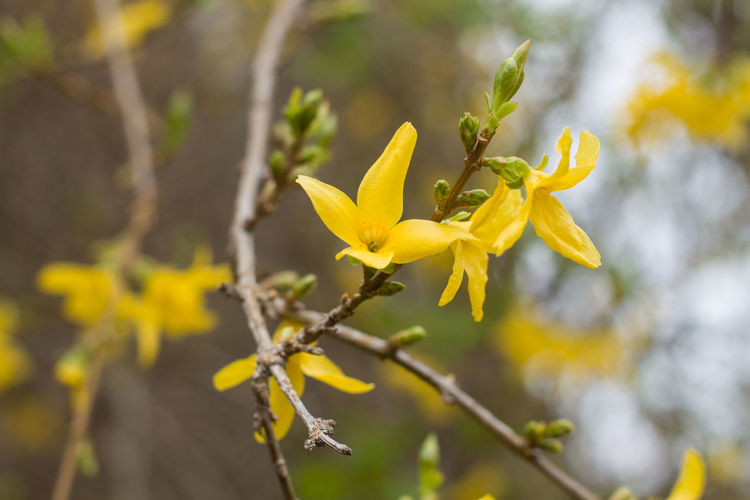 Yellow Plant Flower Flowering Plant Growth Fragility Beauty In Nature Vulnerability  Close-up Focus On Foreground Freshness Petal Flower Head Inflorescence No People Nature Day Outdoors Plant Stem Selective Focus Springtime Pollen