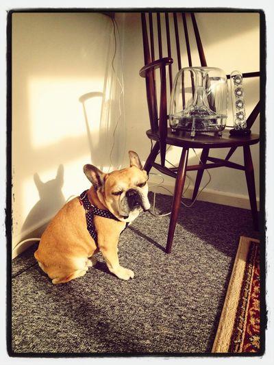 Morning sunspot...