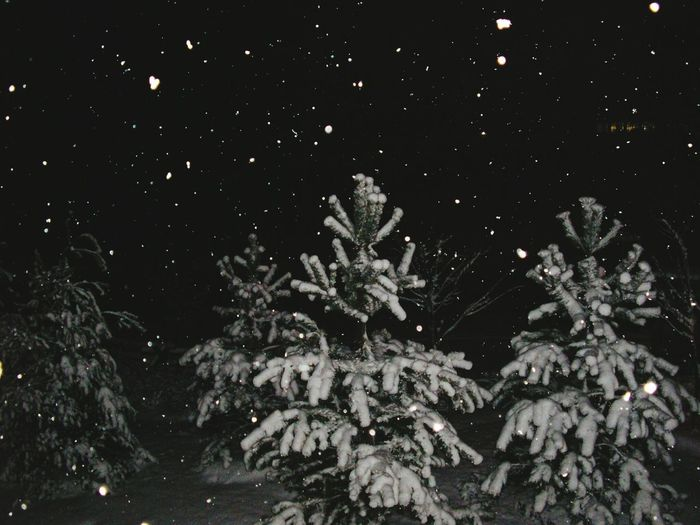 Winter wonderland frozen in time Night No People Illuminated Nature Star - Space Outdoors Winter Beauty In Nature Snowing Close-up Water Black Background Space UnderSea Astronomy Galaxy