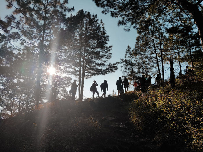 People by trees in forest against sky
