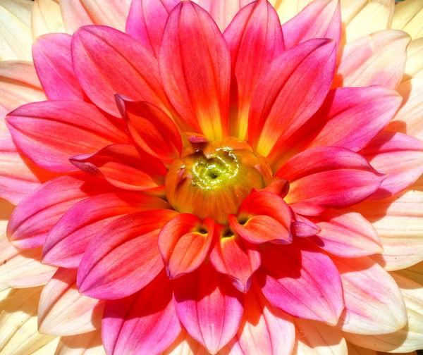 Full frame shot of pink flower