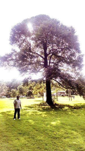 Big Tree Love My Father Enjoying Life