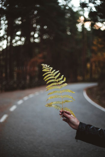 Person holding leaf against trees