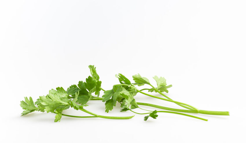 Fresh green basil isolated on white background Aromatic Background Basil Bunch Cooking Food Fragrant Fresh Freshness Green Health Healthy Herb Herbal Herbs Ingredient Isolated Leaf Leaves Natural Nature Organic Pasta Plant Raw