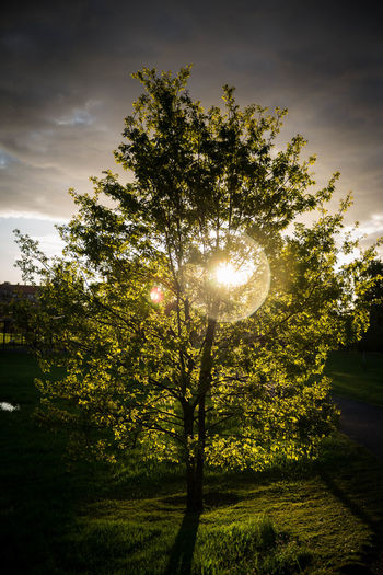 Sun shining through tree