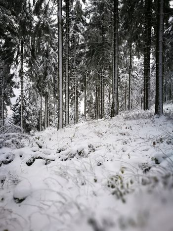 Winther Is Coming First Eyeem Photo