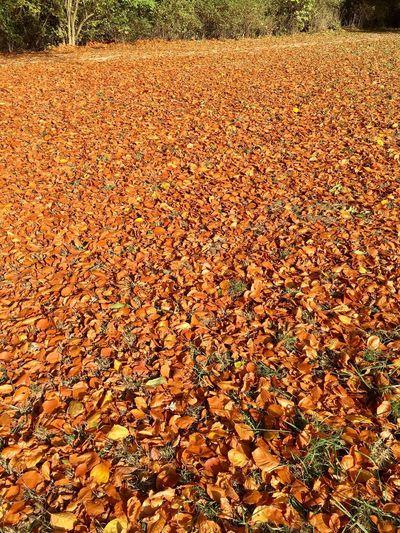 Autumn Change