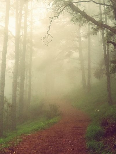 Las Raíces Tenerife Fog Forest Nature Tree No People Beauty In Nature Nature Reserve Tranquility