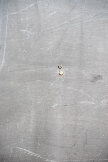 High angle view of white animal on table