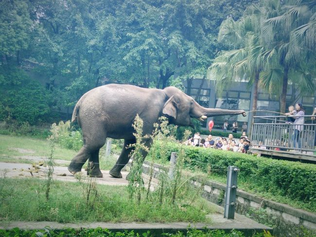 Animal Themes One Animal Mammal Side View Elephant Water Field Herbivorous Outdoors Zoology Zoo Day Nature Domestic Animals Livestock Green Color No People Waterfront