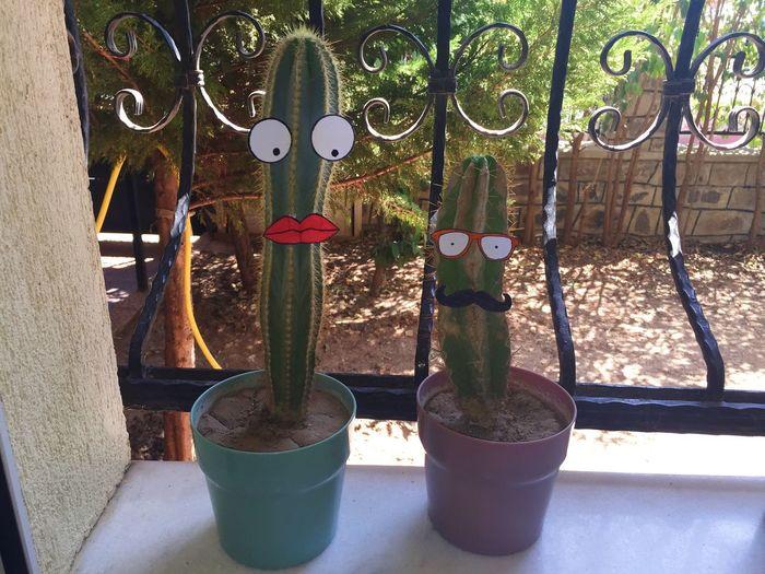 Cactus EyeEm Best Shots