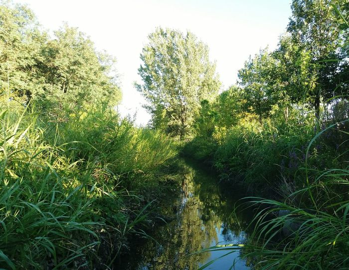 Creek Tree Growth Nature Green Color Low Angle View Day Outdoors Beauty In Nature No People Sky Plant Water Grass Freshness EyeEmNewHere Peschiera Borromeo The Week On EyeEm Nature Sommergefühle