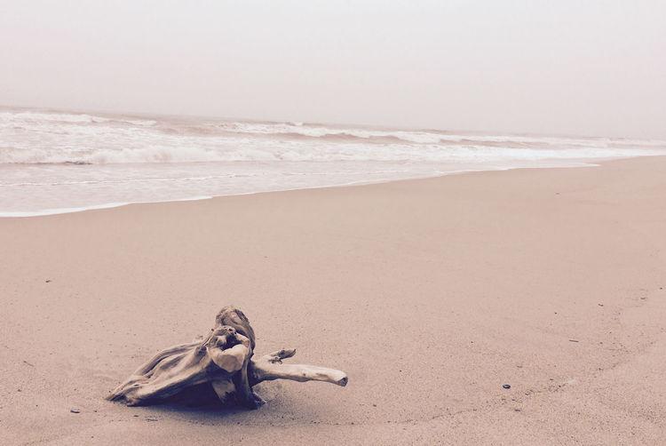 Wood in the beach Beach Casa Grande Nature Photography Palomino Sea Tayrona Tayrona Natural Park Wood Art