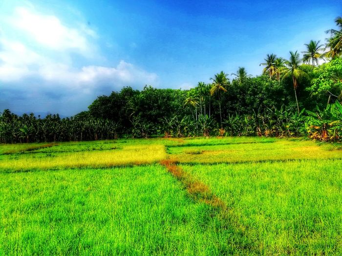Tree Nature Beauty In Nature No People Agriculture Freshness Day Growth Outdoors Scenics Sky Grass Green Color First Eyeem Photo