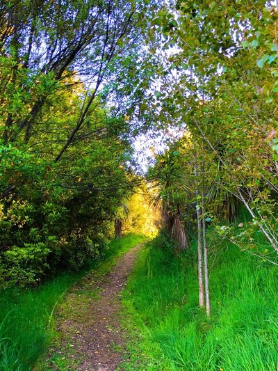 Serenity at home Backlighting Backlit Vibrant Vibrant Color Bushwalking Bushwalk Plant Tree Growth Green Color Direction The Way Forward Beauty In Nature Footpath Grass Tranquility Land Nature No People Tranquil Scene Scenics - Nature Day Non-urban Scene Lush Foliage Outdoors Forest