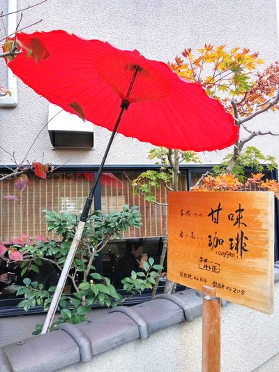 Red Umbrella Japanese Umbrella Paper Umbrella Japan Japanese Tradition Day Outdoors Protection No People Growth Nature
