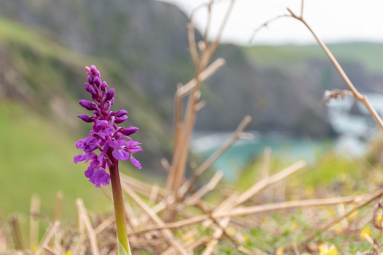 Early Purple Orchid by the sea Orchid Wild Orchid Early Purple Orchid South West Coast Path Walking Coast Coastline Landscape Flora Flowerporn Wildlife Photography Nature Nature_collection Seascape Flower Head Flower Nature Reserve Purple Photography Themes Close-up Plant Landscape Flowering Plant In Bloom Uncultivated Plant Life Wildflower