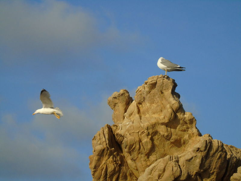 Black & White Seagulls Sicily Beauty In Nature Bird Birds Blue Day Gabbiano Nature No People Outdoors Sea Seagull Sky