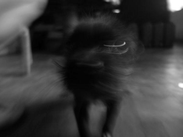 2017_0129. Eyeem CDO Eyeem Philippines EyeEm Gallery EyeEm Masterclass LitratistaSaDaan Everyday Philippines Fujifilm X30 Visual Stories First Eyeem Photo Everyday Life Adapted To The City Monochrome Pet Photography  Animal Lieblingsteil Miles Away EyeEmNewHere Uniqueness