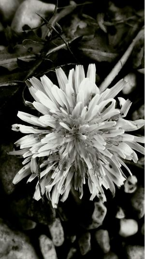 Flowers Blackandwhite Smart Simplicity Smartphonephotography Details Countryside Photooftheday