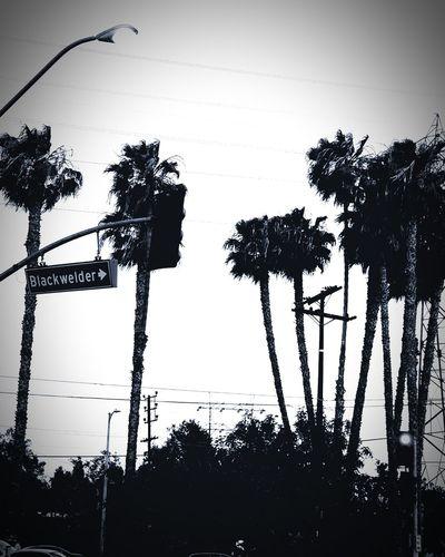 Hello World Black & White Taking Photos On My Way Home