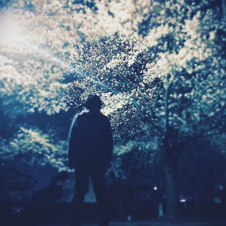 俺の標準木が満開でした。 Tokyo,Japan Nightphotography Sakura No Standard World Silhouette Walking Stories From The City Go Higher