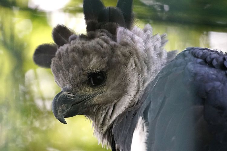 Bird Animal Themes Beak One Animal Close-up Animals In The Wild Animal Head  Animal Crest Day No People Animal Wildlife Feather  Nature Outdoors Bird Of Prey Vulture Harpie Animals