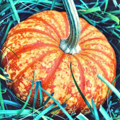Mini pumpkin gourd 🌻 Autumn Still Life Pumpkin Gourd Close-up Outdoors Nature Grown But Not Edible Orange Color Decoration For My Friends That Connect