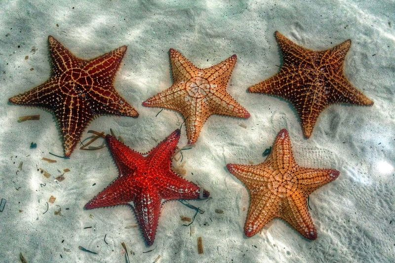 Star Shape Starfish  Star Arts Culture And Entertainment Bright Close-up Celebration Directly Above Multi Colored Dressing Room Sea Life Animal Themes Wood - Material Television Industry Space Baked Pastry Item Sand Beauty In Nature Fitting Room Indoors  EyeEmNewHere Flying High