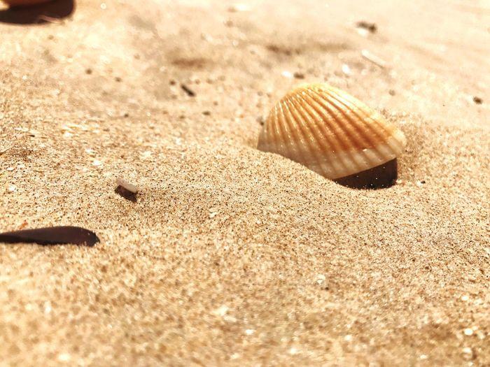 Beach.🌊 Beach