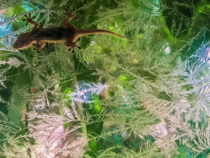 """Gecko On Ice"" Green Color Nature Paul W Koester Photography Artist Perspective Gecko Reptile Lizard Ice"