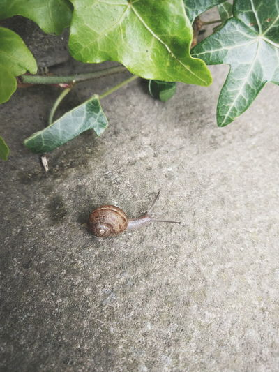 Close-up high angle view of snail on ground