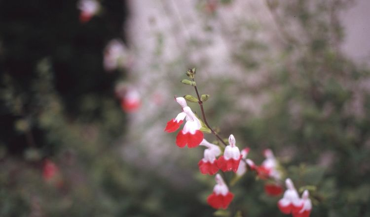 Tokyo,Japan Streatphotograpy Nature Plant Flowers Japan Eos1v