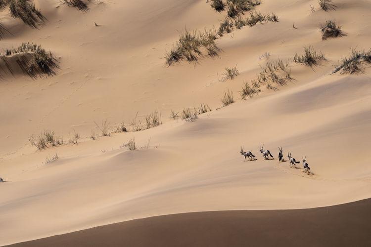 Scenic view of desert against sky during winter