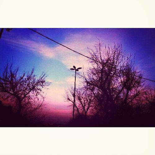 Ağaçlara ve bulutlara olam zaafım.