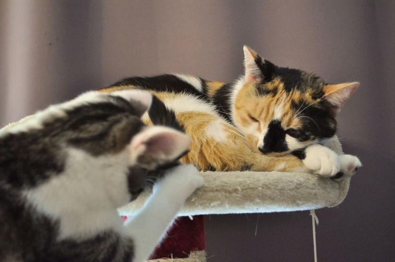 Kitten seems to