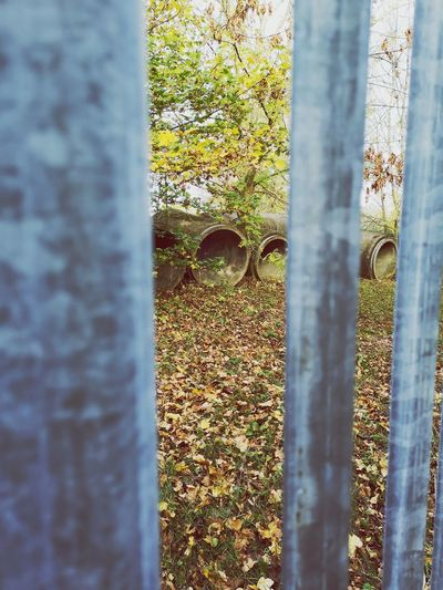 Barred Fence Countryside EyeEmNewHere Landscape Autumn Autumn colors Walking Discovery Railing Outdoors Window Close-up Architecture Weathered
