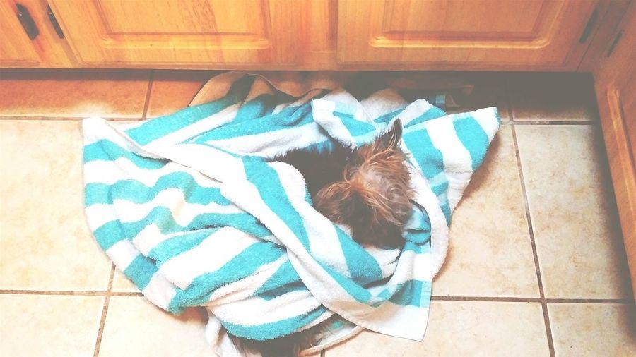 High angle view of dog sleeping at home