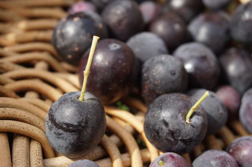Olive Close-up Basket EyeEm Selects Black Olive Close-up Crop  Harvesting