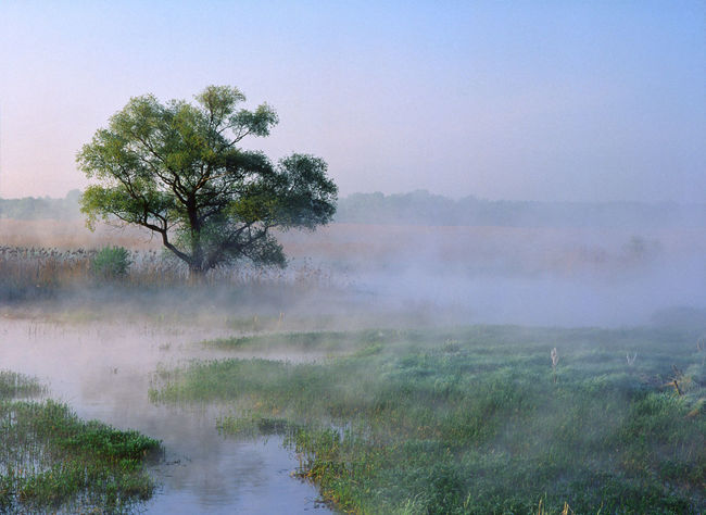 Beauty In Nature Countryside Dawn Field Fog Foggy Grassy Landscape Mist Narew Narwianski National Park Nature No People Non-urban Scene Poland Remote Riverbank Scenics Solitude Sunrise - Dawn Tranquil Scene Tranquility Tree Water