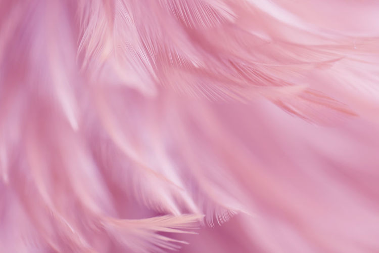 Full frame shot of pink feathers