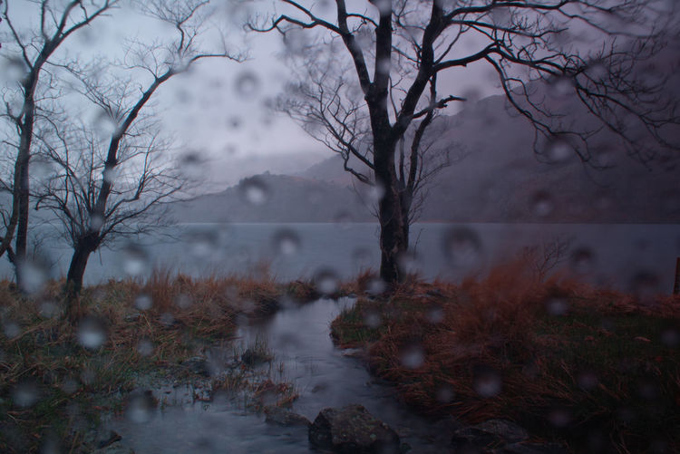 I like the effect the raindrops make in this picture Rain RainDrop Raindrops Tree Water Bare Tree Branch Fog Lake Reflection Forest Sky Landscape Rainfall Weather Wet Foggy Mist Lush - Description
