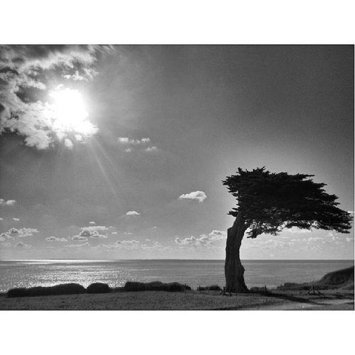 """Impossible de ne pas penser a mon arbre si chère... pour le challenge """"arbre solitaire"""" Igf_midiminuit68 @igersfrance"""